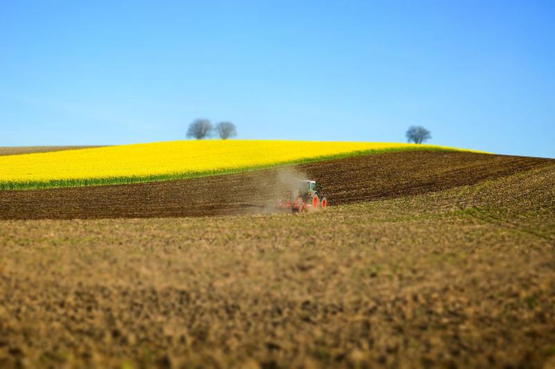 Ackerbau, Bodenbearbeitung mit Rapsfeld im Hintergrund