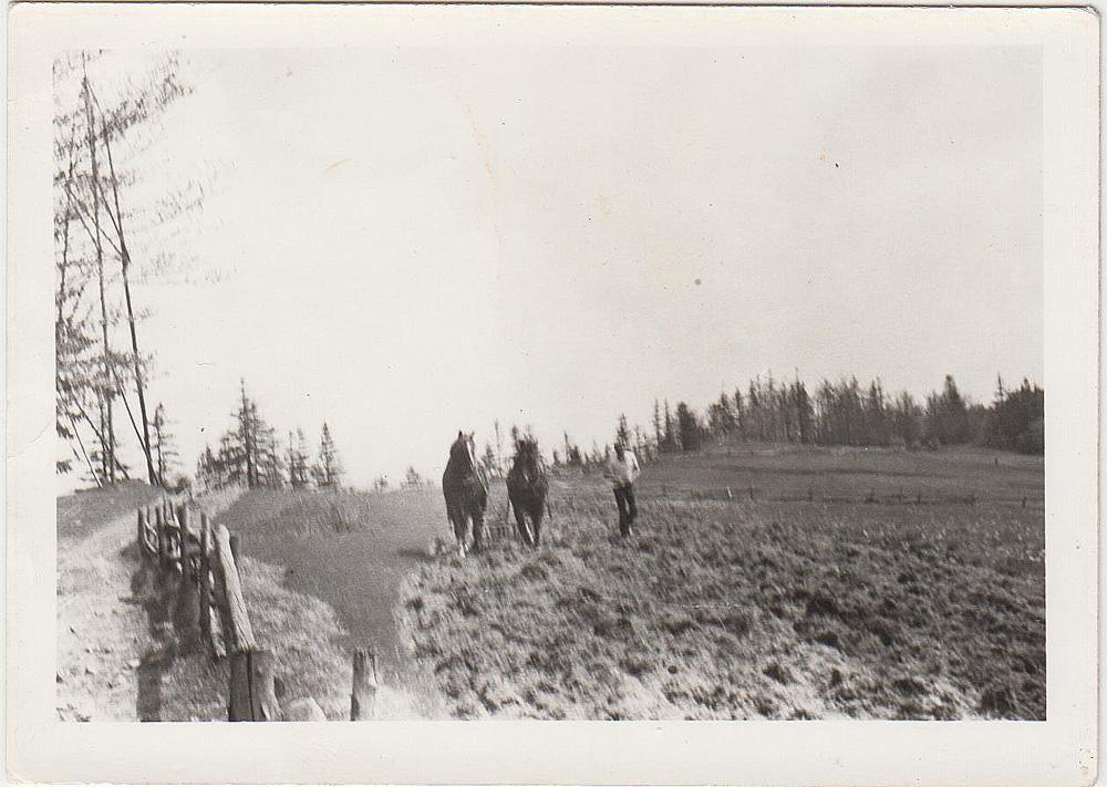 Franciszek Gacek orze pola na Polanie Surówki po lewej stronie patria na Wierchach